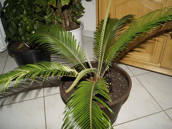 palme2