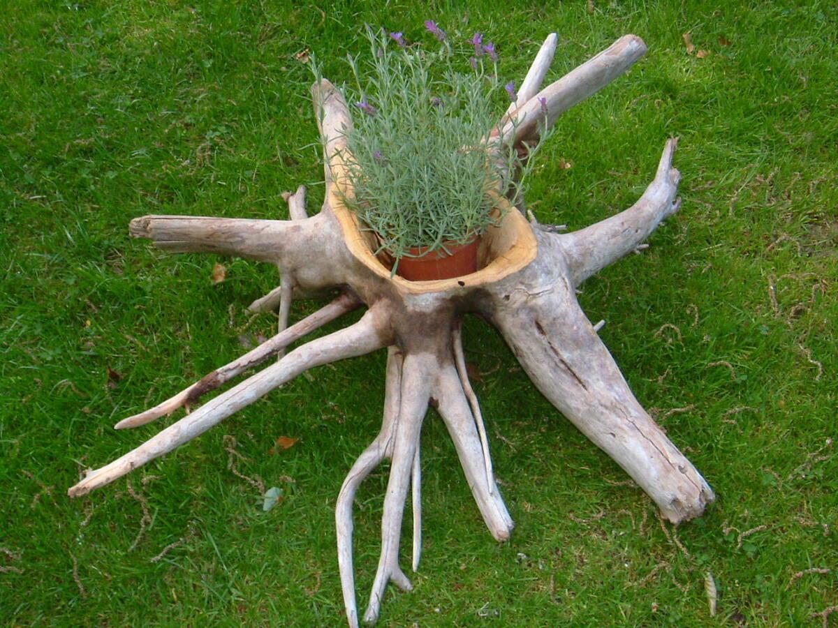 Pflanz - Ring aus Wurzel Holz