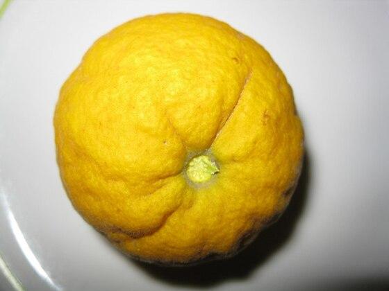 Poncirus, Frucht geschlachtet