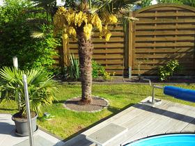 Palme-Pool