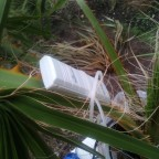 Sensor, Washingtonia