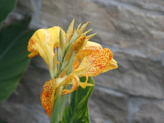 Garten2011 019