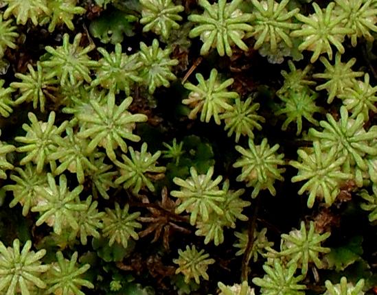 """Palmenwald"" en miniature"