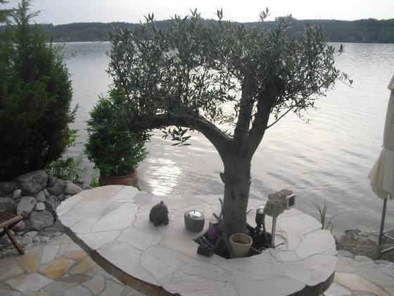 Olivenbaum - Tisch